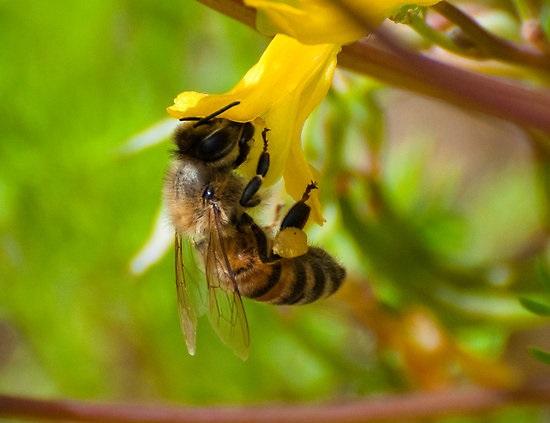 nectar verzamelen